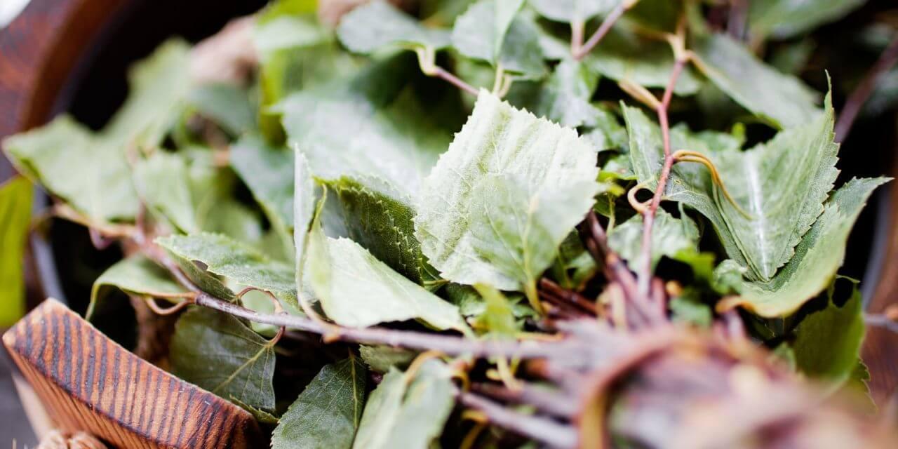 Twigs – vasta or vihta